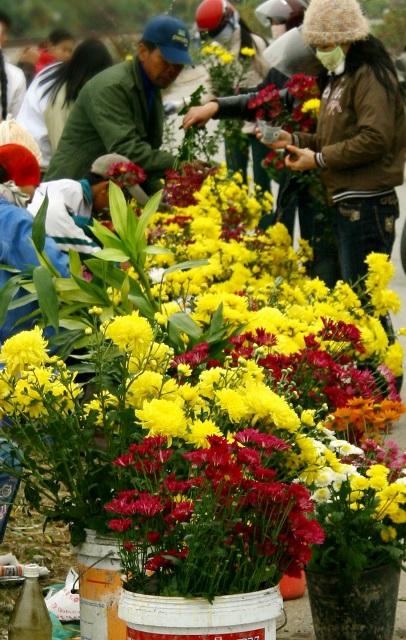 vung dat phu sa nhin dau cung thay hoa, thanh trieu phu nho hoa hinh anh 8