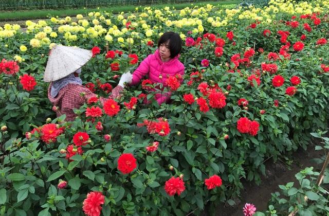 vung dat phu sa nhin dau cung thay hoa, thanh trieu phu nho hoa hinh anh 6