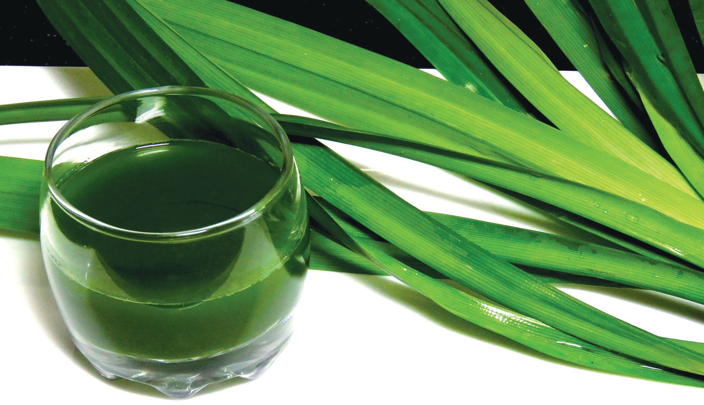 Image result for trà lá dứa