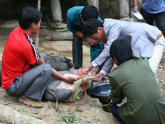 Trong ngày cưới đầu tiên, gia đình nhà gái sẽ mổ con lợn mà nhà trai mang sang để mời bà con đến ăn uống mừng cho đôi vợ chồng trẻ