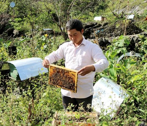 Người nuôi đưa từng cầu ong ra ngoài kiểm tra lượng mật rồi mới khai thác