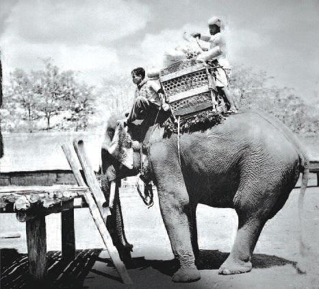Dỡ hàng xuống từ lưng voi