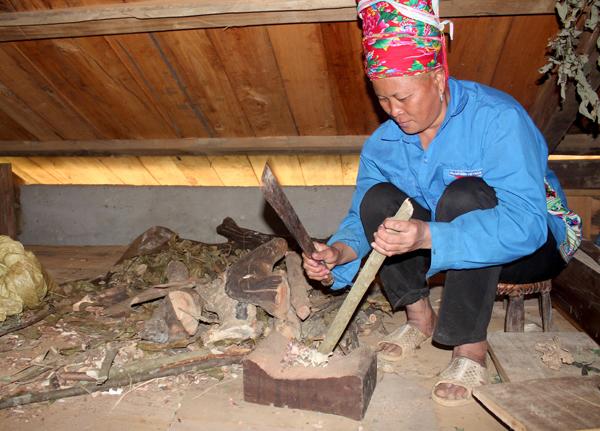 Bà Tẩn San Mẩy sơ chế dược liệu lấy từ rừng