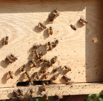 Nuôi ong khai thác mật là một nghề truyền thống có từ lâu đời của đồng bào các dân tộc trên địa bàn tỉnh Hà Giang