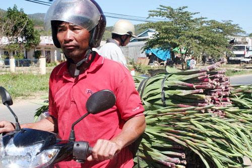 Người trồng hoa lay ơn ở Định An phấn khởi vì hoa được giá
