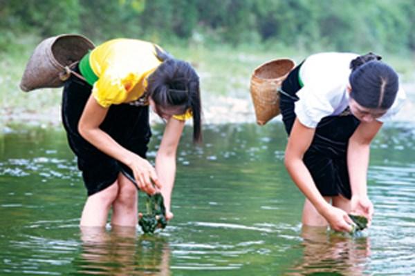 Hái rêu - nét văn hóa độc đáo của đồng bào Thái