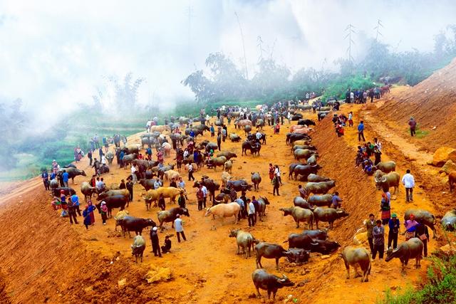 Chợ trâu