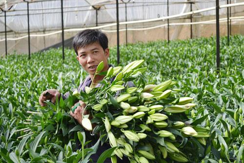 Anh Lê Tiến Vy phấn khởi khi hoa ly năm nay được giá