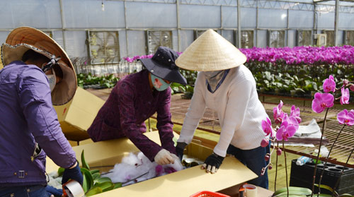 Trang trại Ánh Dương đóng hoa đi các tỉnh
