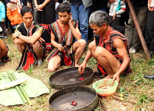 Già làng lấy tiết của những con vật trộn chung với hạt giống