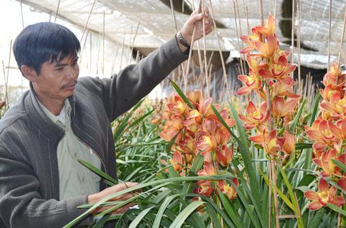 Địa lan cam lửa giá từ 1 - 1,2 triệu đồng/cành