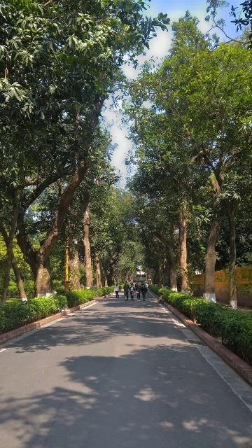Đường Xoài trong Khu di tích Chủ tịch Hồ Chí Minh tại Phủ Chủ tịch