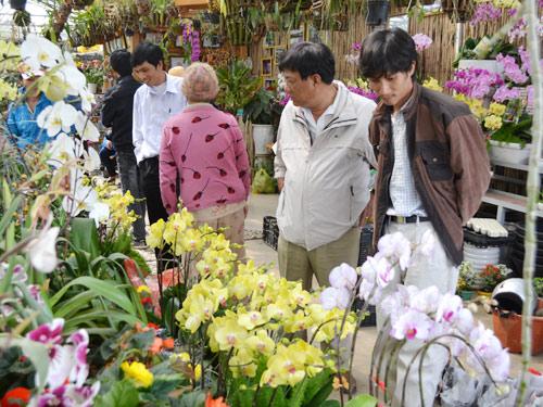 Nhộn nhịp người mua hoa